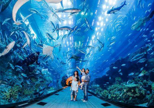 Dubai Aquarium & Underwater Zoo Experience